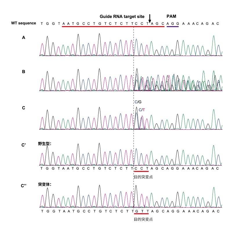 FAQ-数据图-CS5-10-xg.jpg