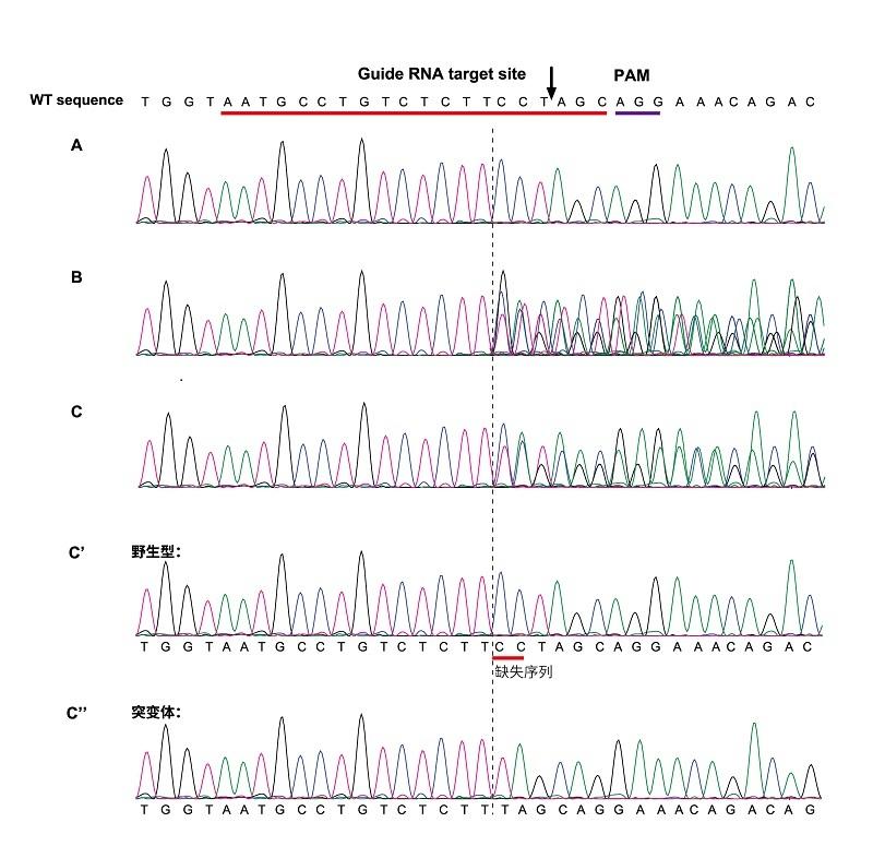 FAQ-数据图-CS5-09-xg.jpg