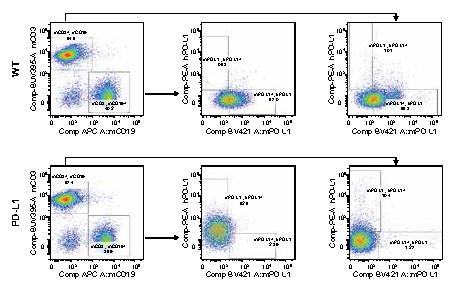 页面提取自-SMOC18008-C-免疫检查点人源化小鼠-pd-l1.jpg