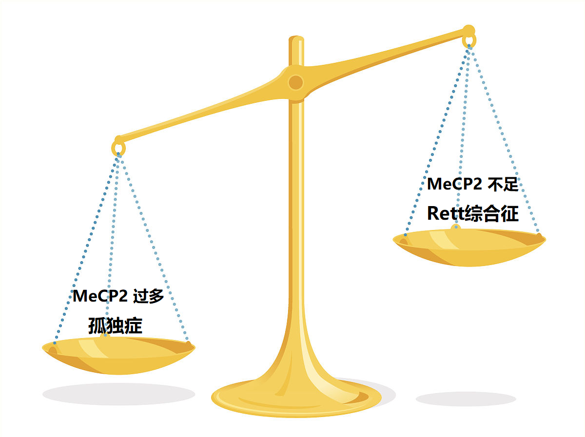 Mecp2-1.png