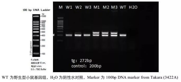 PCR-电泳.jpg
