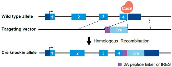 图9.png
