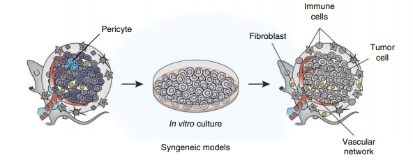 Syngeneic models-1.png