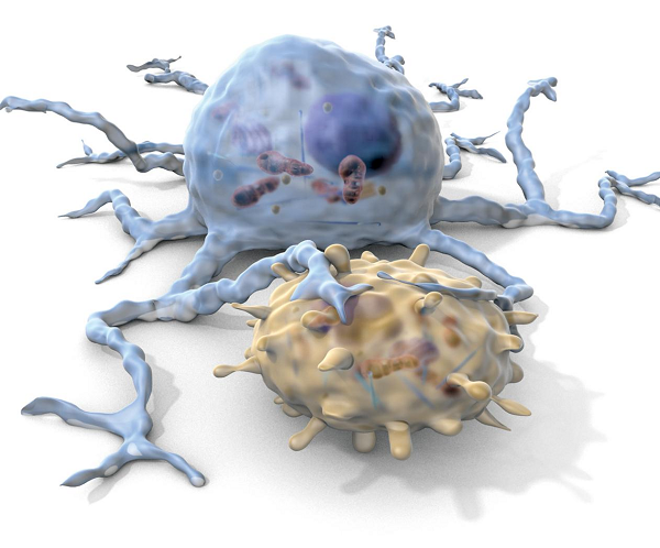 树突状细胞-1.png