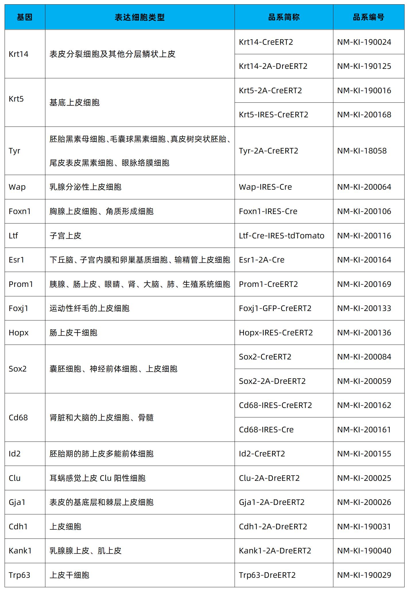 上皮细胞-9.png
