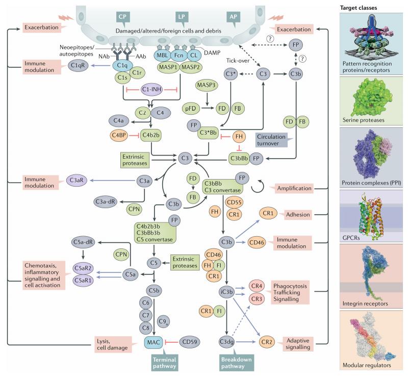 补体丨免疫药物的下一站荣光(附动物模型)-4.png