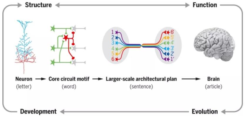 脑科学-图7.png