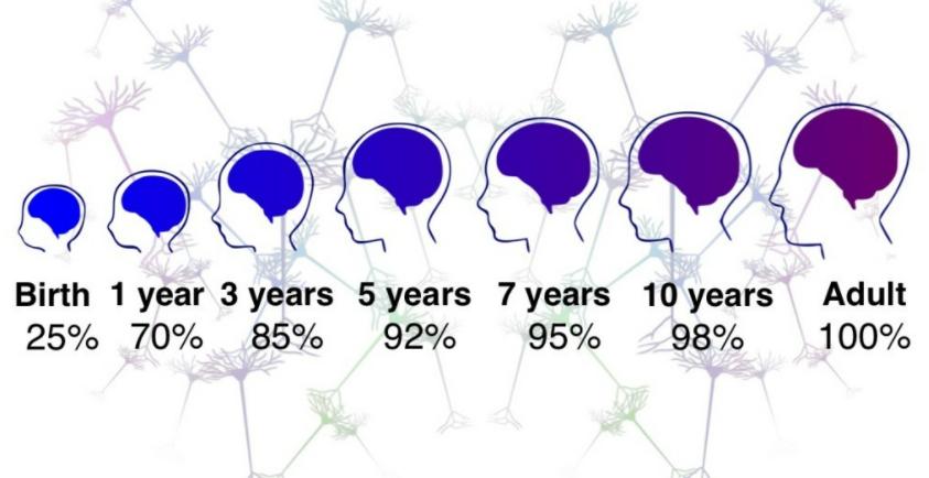 脑科学-图2.png